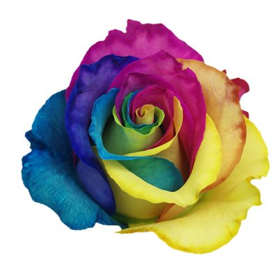 RAINBOW-TINTED ROSES-MATINA FLOWERS